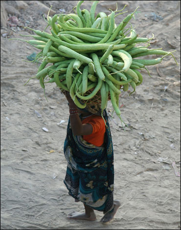 A woman carries cucumbers from her field to sell in the markets in Allahabad.