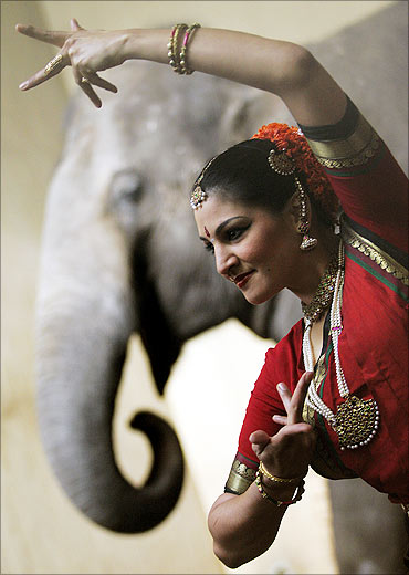 A dancer in a traditional Indian dress poses in front of an elephant.