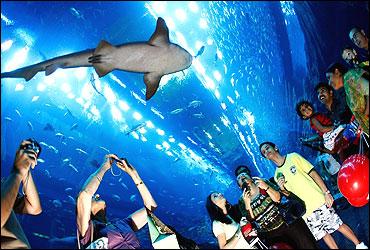 Aquarium at The Dubai Mall.