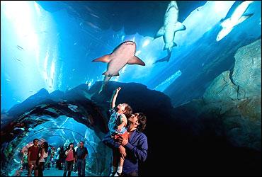 Aquarium at Dubai Mall.