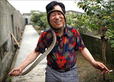 Yang Hongchang, owner of  a snake rearing company holds  a snake at a snake farm in Zisiqiao village.
