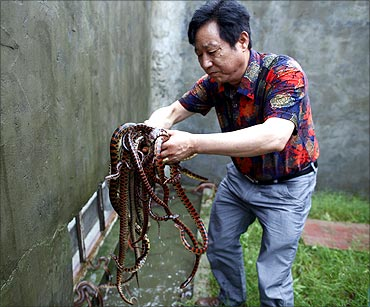 Yang Hongchang, boss of  the snake rearing company holds snakes at the snake farm in Zisiqiao.