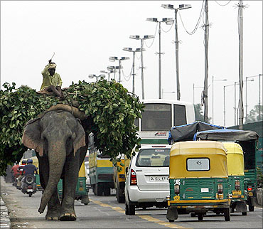An elephant carries a heap of leaves through traffic on a bridge over river Yamuna.