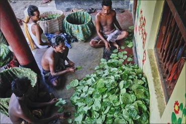 Farmers sort and arrange betel leaves on the doorstep of a house in Gobindpur village, about 75 km east of Orissa's capital Bhubaneswar.
