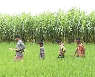 Singur farmers want land back, as legal battle on