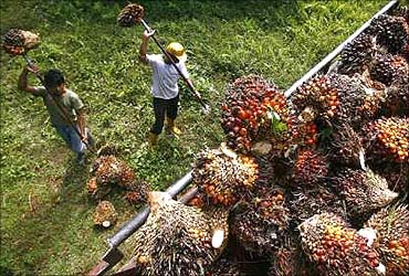 Plan to raise palm oil production is a welcome step