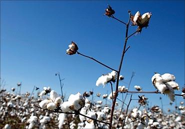 Cotton is emerging as asset class