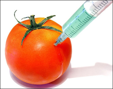 GM crops.