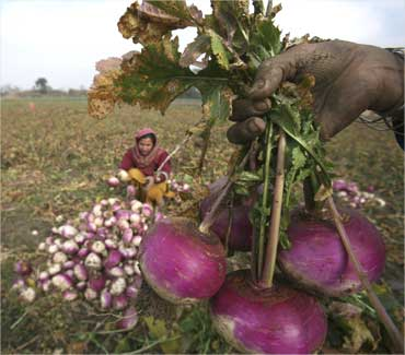 A farmer shows turnips to a trader at her vegetable field.