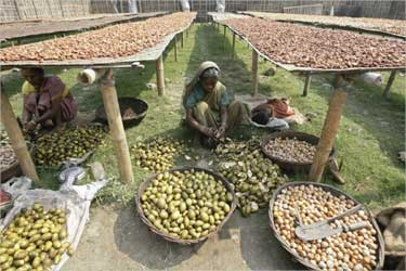 Labourers cut betel nuts at a cottage industry in Choto Shalkumar village, about 160 km (99 miles) north of Siliguri.