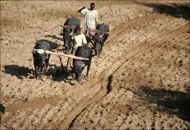 A farmer in Ranchi, Jharkhand.