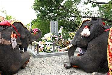 Elephants sit at Japanese Village in Ayutthaya province to mourn for the victims of the earthquake.