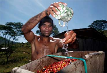 An East Timorese man pour water before grinding coffee beans.