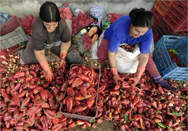 Women prepare paprika in the village of Vasilevo near Strumica, Macedonia.
