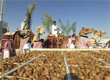 People lead their camels past boxes of dates on display in the city of Buraidah, north of Riyadh.