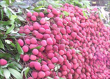 Bihar, second largest producer of fruits