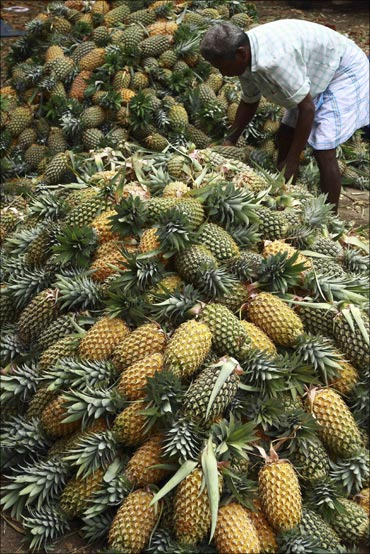 A labourer arranges pineapples at a wholesale pineapple market in Vazhakulam.