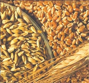 China imported highest amount of grain in history in 2010