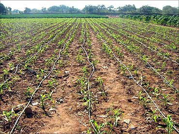 Drip Irrigation on an onion field.