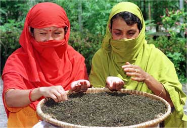 Two women examine processed tea leaves at a garden in Darjeeling.