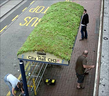 Green roof bus stop.