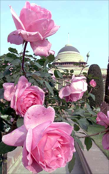 Roses bloom in Mughal Gardens.
