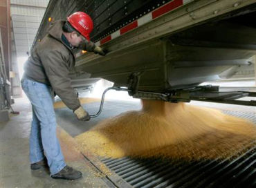 In the US, 40 per cent of corn production is diverted to biofuels.