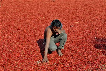 India facing food crisis