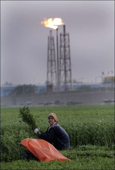 A farmer harvests clover in front of the Mstrd oil refinery in Cairo.