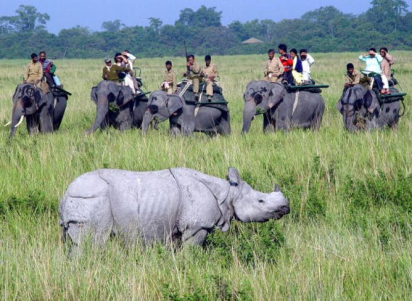 A rhino at Kaziranga National Park in Assam.