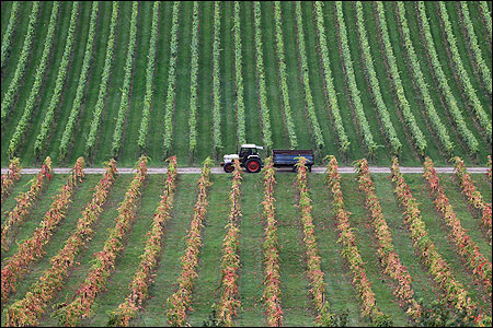 A tractor pulls a trailer past grape vines.