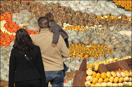 Visitors look at pumpkins arranged in an exhibit.
