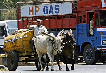 A worker transports kerosene oil in a bullock cart.