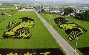 Japan produces 105 million metric tonnes of rice.