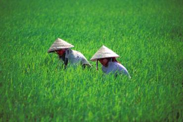 Vietnam produces 388 million metric tonnes of rice.