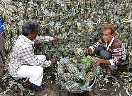Men fill a basket with pineapples while unloading them from a supply truck at a fruit wholesale market in Ahmedabad.
