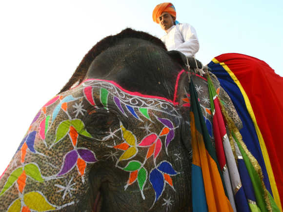 A mahout sits atop his decorated elephant in Jaipur, Rajasthan.