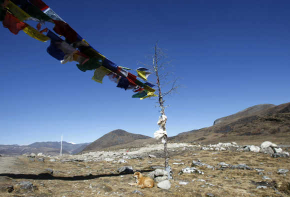 A dog rests on the Indian side of the Indo-China border at Bumla in Arunachal Pradesh.