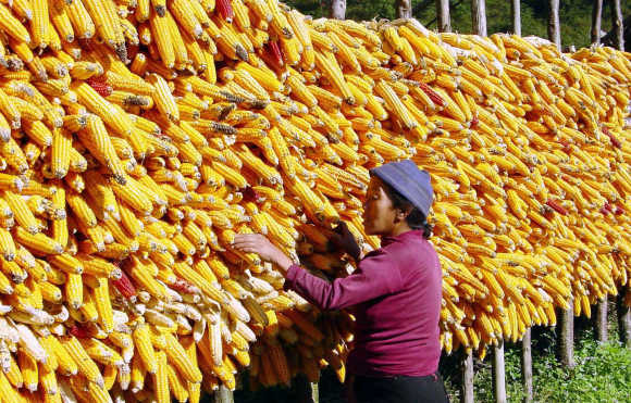 A woman dries corn in her compound in Bomdila in Arunachal Pradesh.