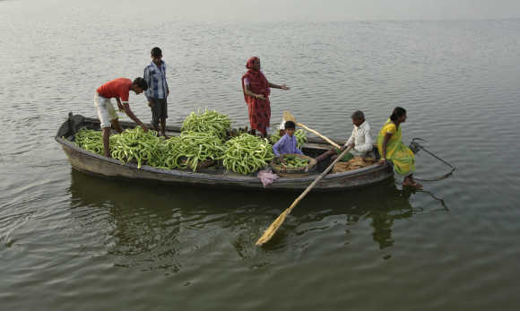 Farmers transport cucumbers on a boat through the waters of river Ganges to sell at a market in Allahabad.