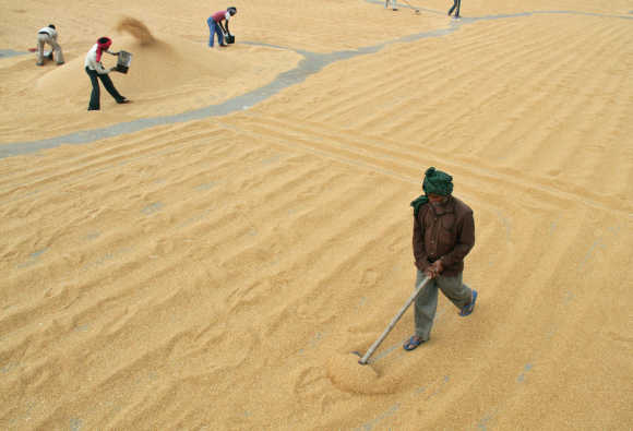 Workers spread wheat to dry at a wholesale grain market in Chandigarh