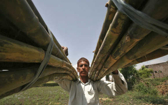 A farmer carries sugarcane from a field on the outskirts of Jammu.