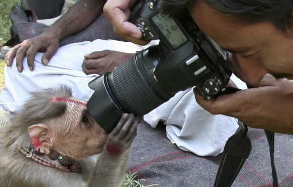 A photographer takes a picture of a monkey near Jammu.