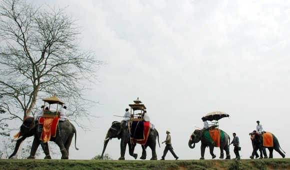 Decorated elephants take part in a procession during an elephant festival at Kaziranga National Park, Assam.
