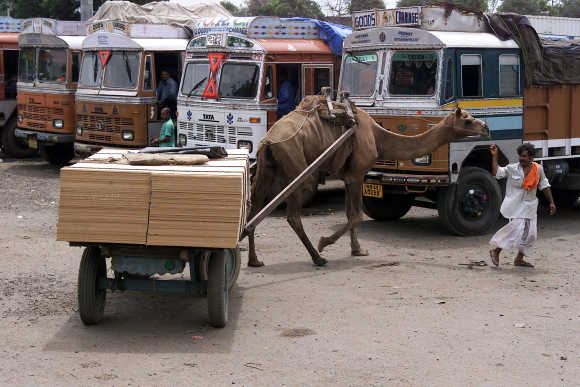 Camel transports goods past parked trucks in Ahmedabad.