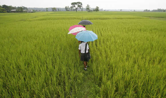 Schoolchildren walk through a field at Koribari village, Siliguri.