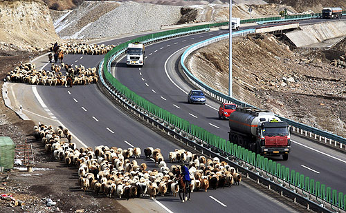 Shepherds lead their flock of sheep along on the Guozigou segment of the Lianyungang-Horgos expressway as vehicles drive past the other side of the expressway.