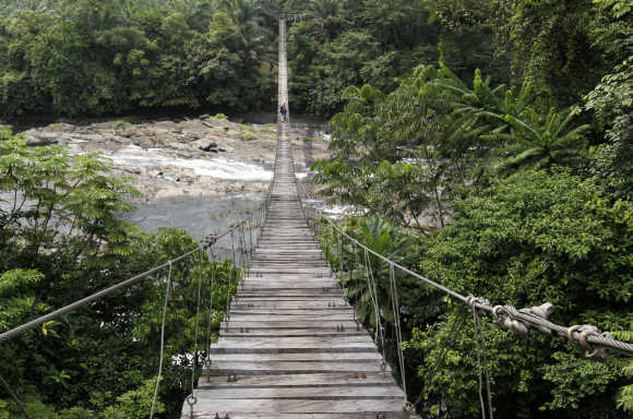A view of a hanging bridge leading into Cameroon's Korup National Park.