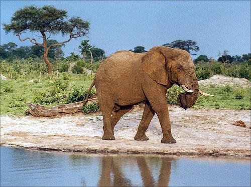 Hwange National Park, Zimbabwe.