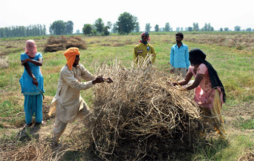 Drought spoilt farm sector's dream run in 2012
